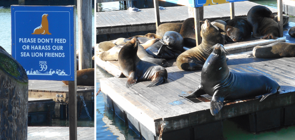 dont feed the sea lions