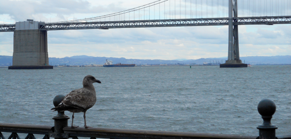 pidgeon and bridge